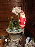 Lit-up 1960s Santa Claus with double-flowering amaryllis and paperwhites. I like to force bulbs indoors.