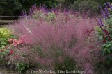 Pink muhly grass in Dee Nash's garden (1 of 1)