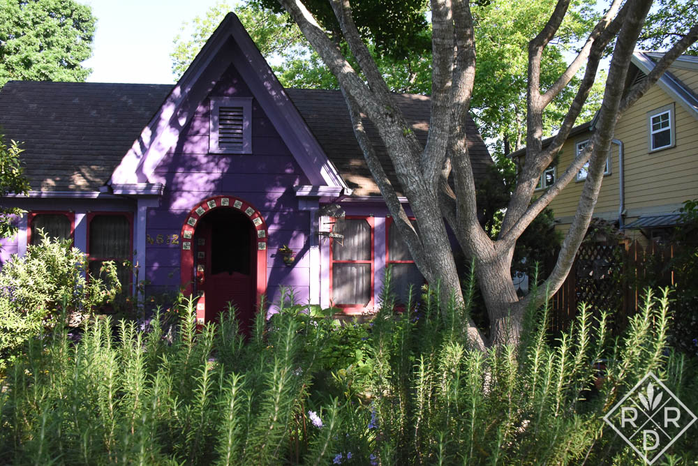 A bed of rosemary in front of Lucinda's house in Austin, TX.