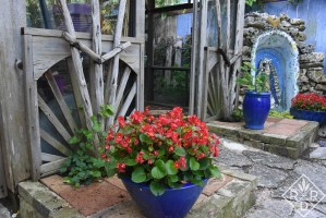 Cobalt pots holding begonias perfectly grown.