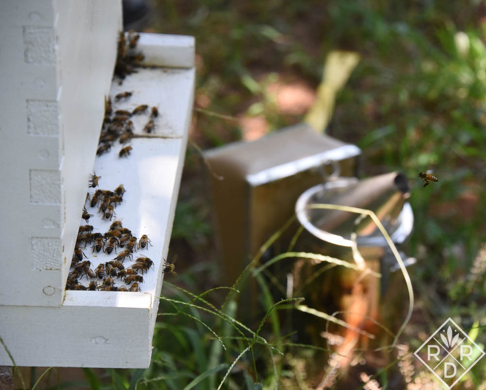 My favorite photo of the day is of a worker bee flying into the hive.