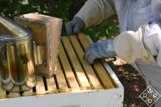 Lifting the first frame out of the upper hive body.