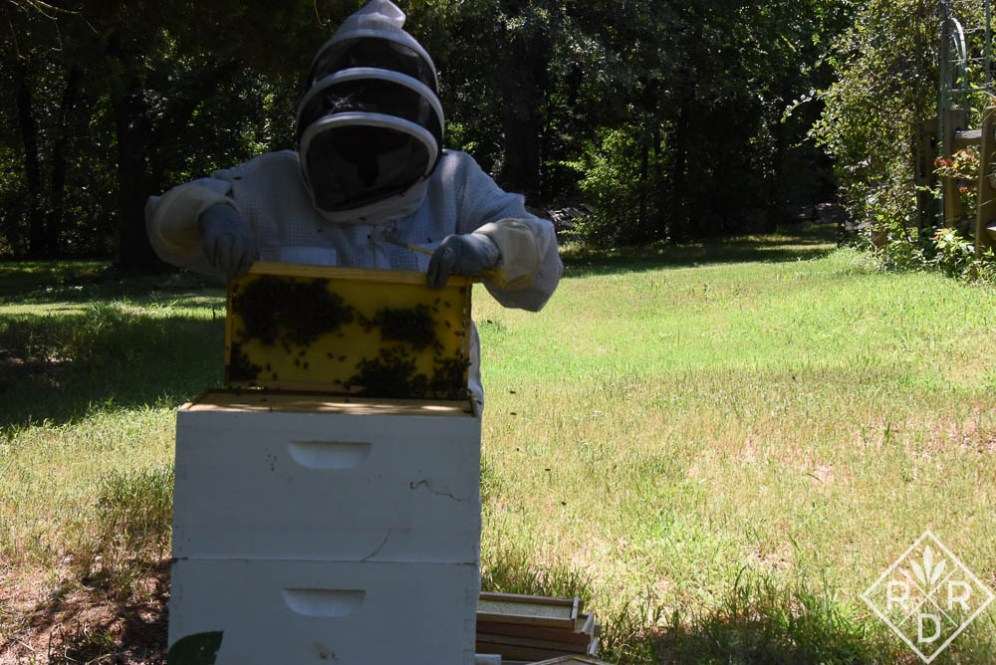 Putting the frame back into the hive.