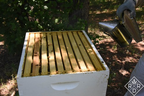 After I smoke them, the bees run back down into the hive body. All their little faces were staring up at me though.