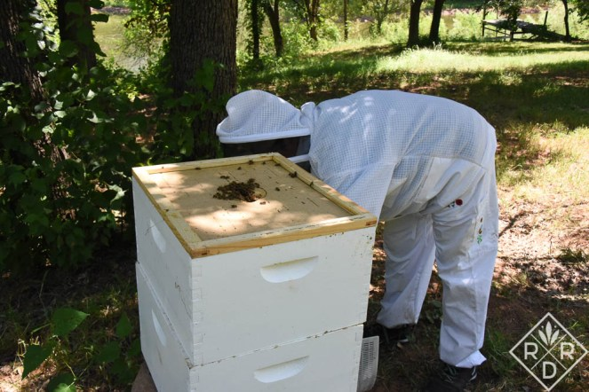 Taking off the top cover to expose the inner cover. There were lots of bees in the top hive body after the inspection the day before. Angry honey bees.