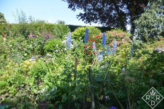 Delphiniums at Low Hall.