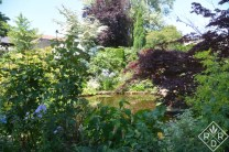 The pond at Low Hall was an amazing area of life. There were so many insects flying about. It was wonderful.