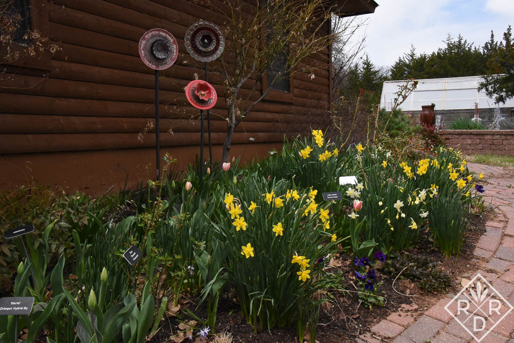 Garage border with daffodils and a few tulips
