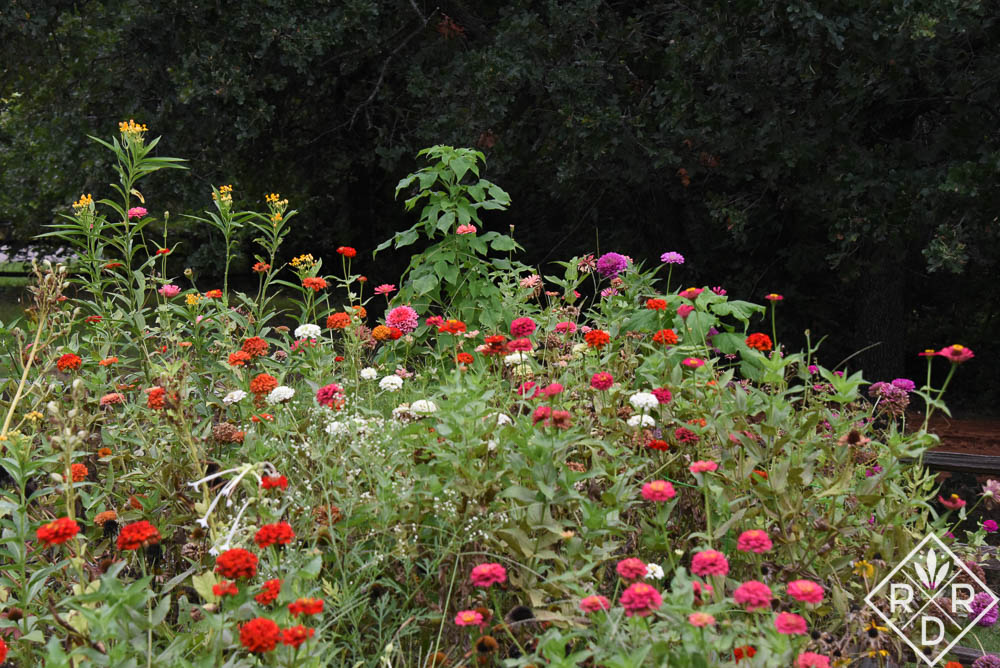 Zinnias and tropical milkweed for Monarch butterflies.
