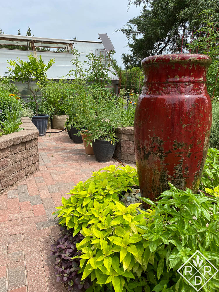Red fountain with pineaplle sage and Amazel basil. Proven Winners plants