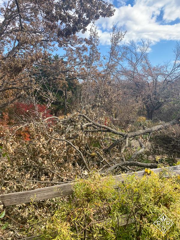 Giant branch still down in the back garden