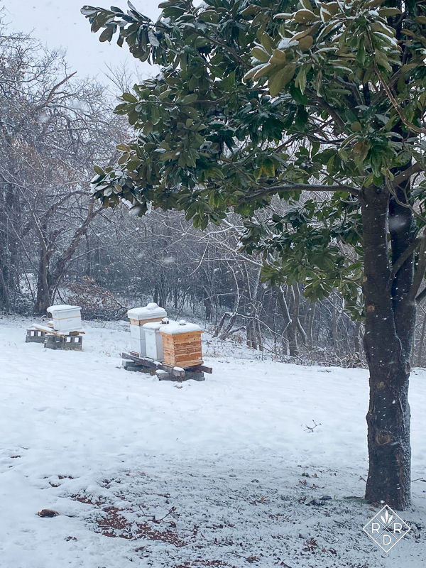 My four bee hives in the snow.