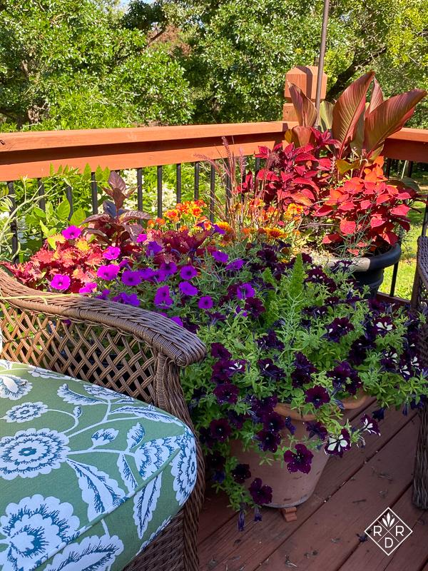 Petunias bloom well