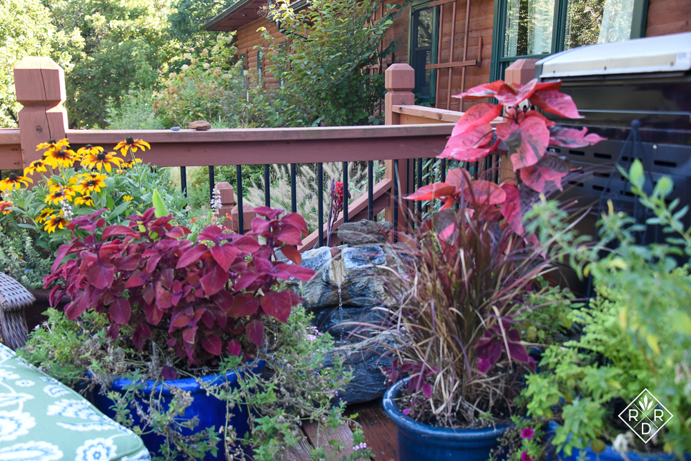 Copperleaf plant and blue pots