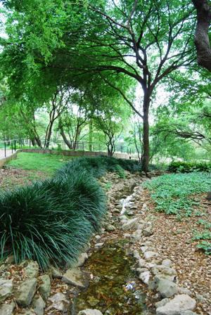 Koi Pond @ Zilker Botanical Gardens