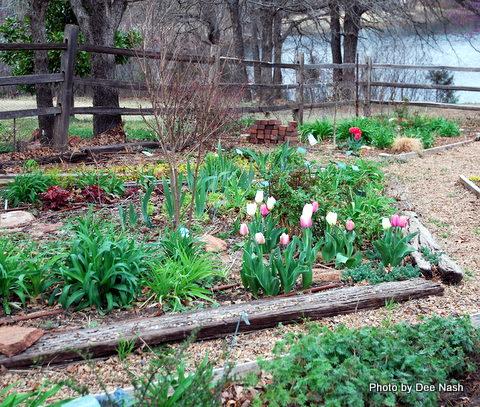 The left side of the backyard garden