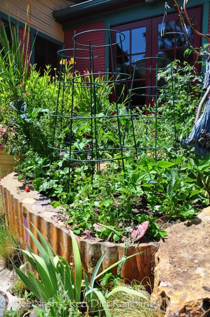 Vegetables and fruit in a raised bed made of concrete with a corrugated edge.