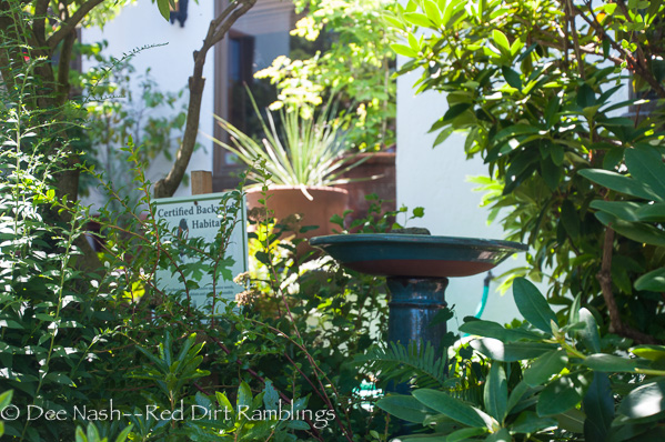 Certified Backyard Habitats need a water source for birds and pollinators.
