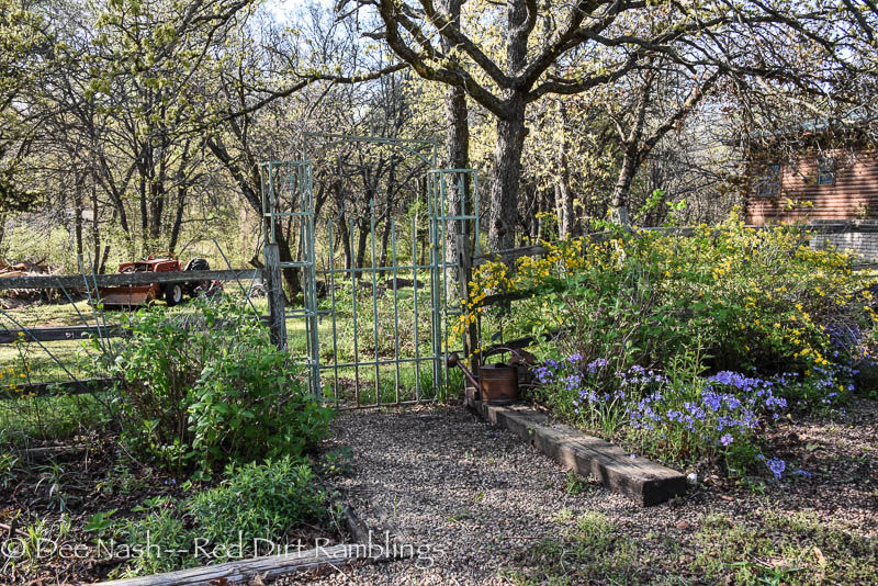 See how the single Japanese kerria has flowed behind Hydrangea arborescens 'Annabelle' on the right hand side. I moved some of the Japanse kerria and Phlox divaricata to the other side to try and balance things in spring.  Garden magic