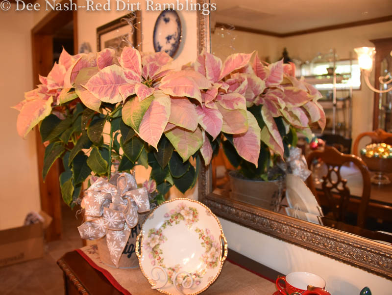 Christmas flowers like this yellow and pink poinsettia with a vintage Hellebore and holly plate and Shiny Brites in a silver bowl as shown in the mirror.