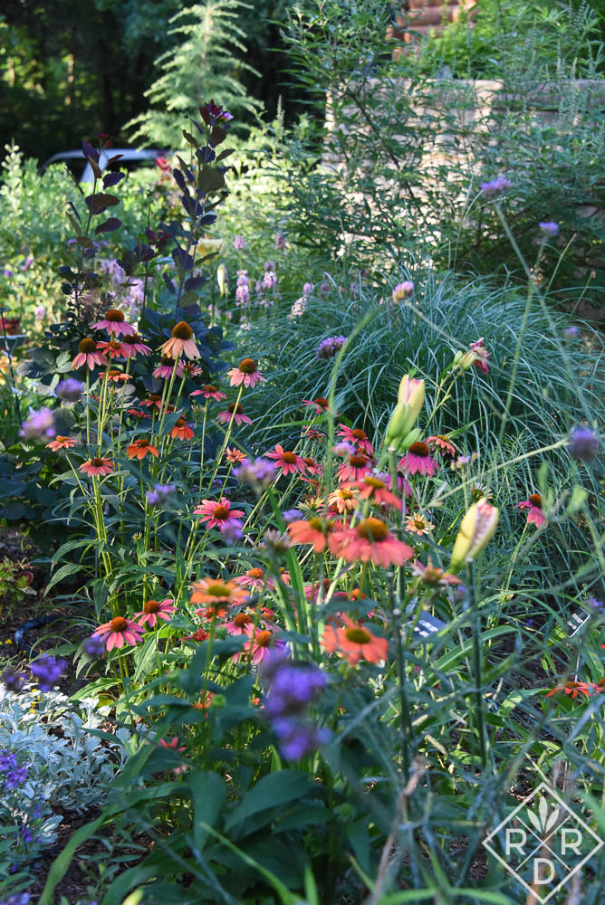 Side border with Cheyenne Spirit echinacea and daylilies.