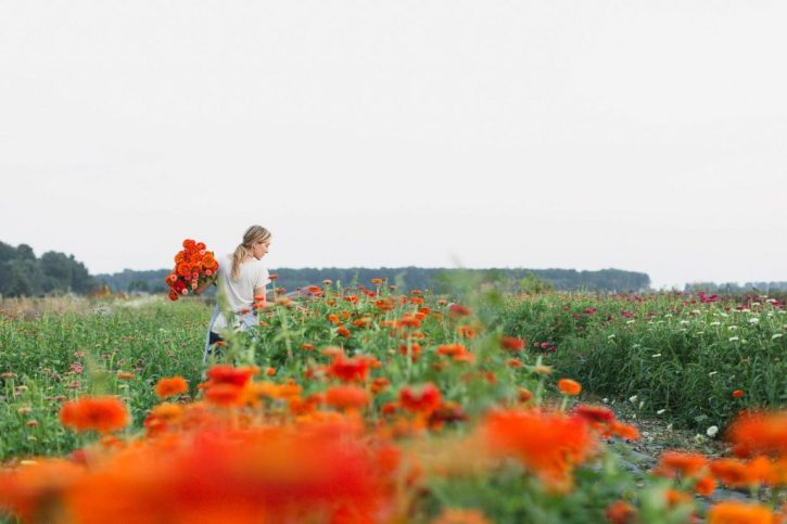 A summer day full of zinnia harvesting at Floret Farm.