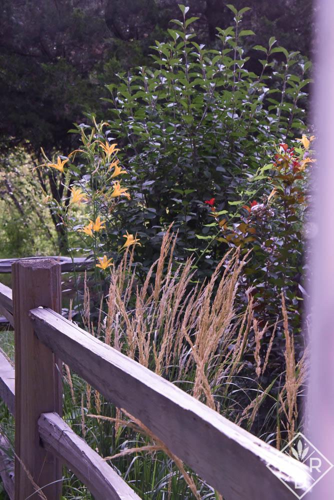 Calamagrostis x acutiflora 'Karl Foerster' with 'Autumn Minaret' daylilies.