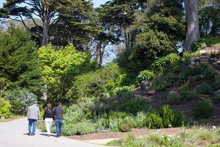 SF-Botanical_20140323_0295b