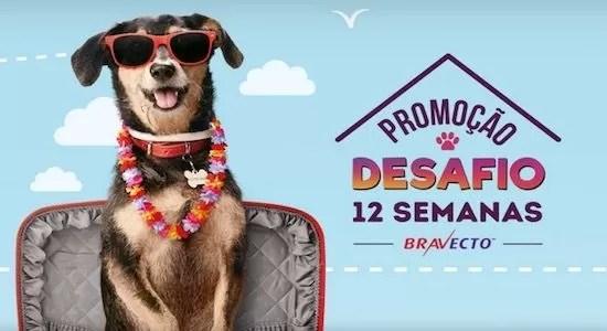 Bravecto Promoção Desafio 12 Semanas Bravecto - Rede da Promoção