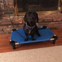puppy-dog-training1-dfw
