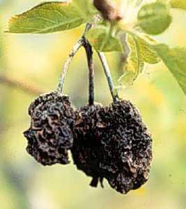 bad tree bad fruit