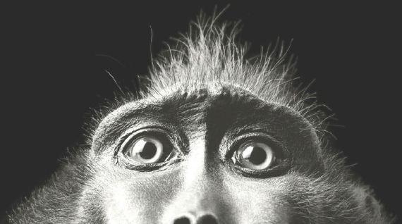 genesis 1:24-25 humans animals evolution