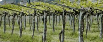 training the vine John 15:2