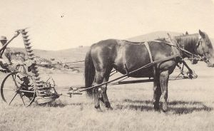 Herb Swan mowing Hay in 1914