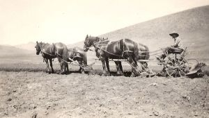 Herb Swan Plowing, early 1900s