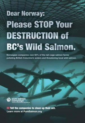 Salmon farms are the filthy feedlots of the sea