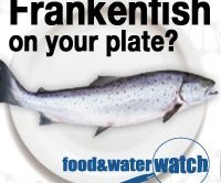 frankenfish_food_and_water_watch