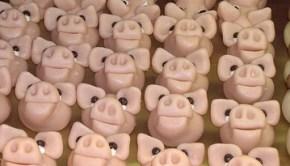 gmo-piggies