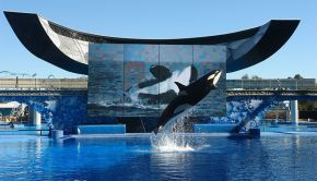 Sea world ending orca program - photo by The Katwoman