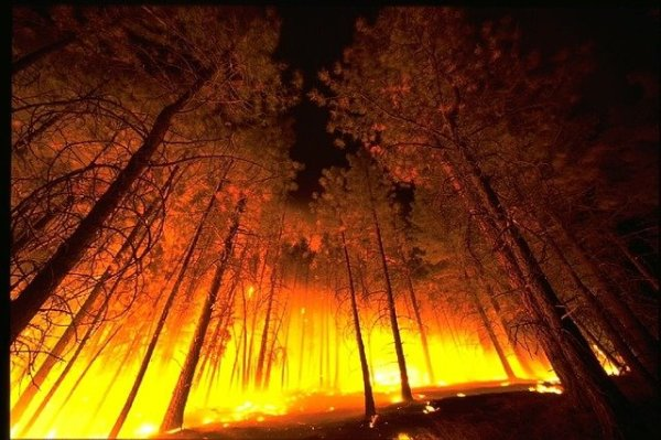 climate change caused forest fires