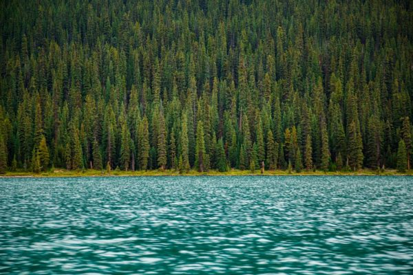 trees and water - natural capital. By Justin Sinclair
