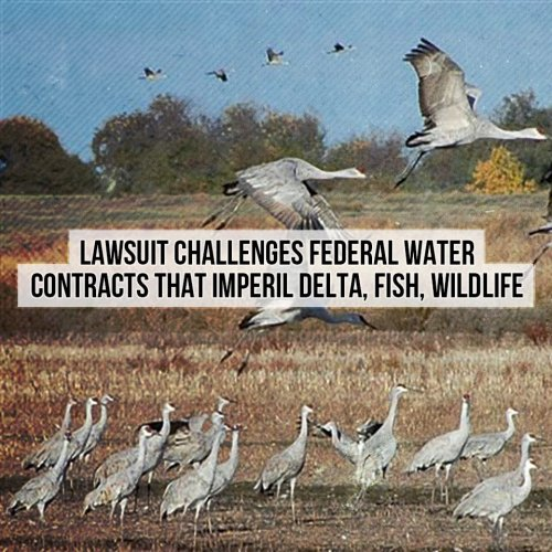 Lawsuit challenges Federal water contracts that imperil the fish, wildlife and people of California's Sacramento Delta