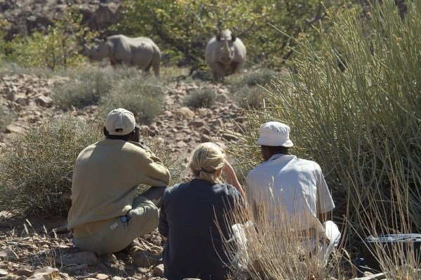 protecting endangered rhinos - hard to do during a coronavirus pandemic