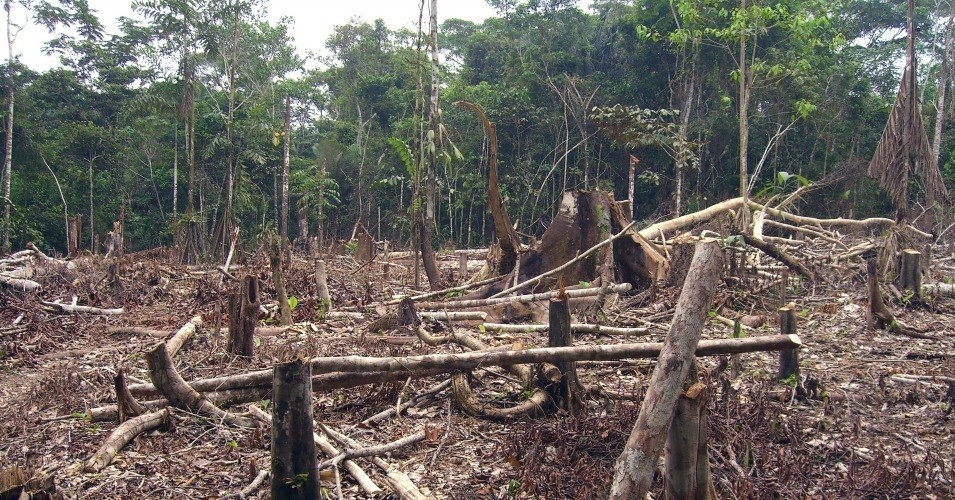 Deforestation is among the human activities which threaten to lead to another more deadly pandemic scientists say