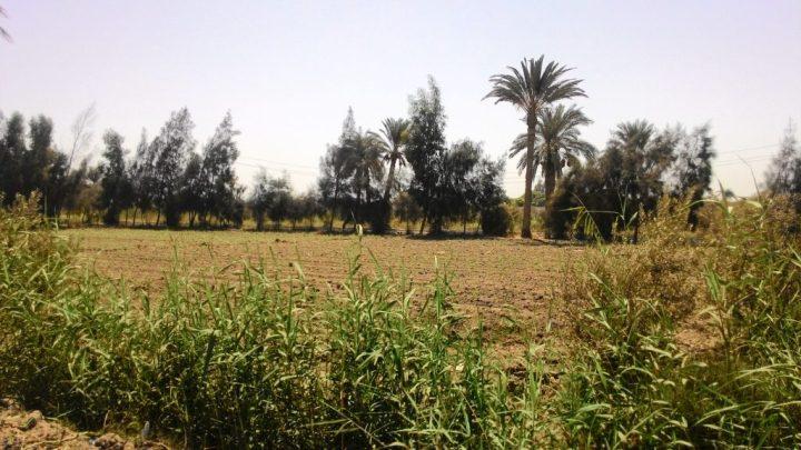 farming in fayoum, egypt
