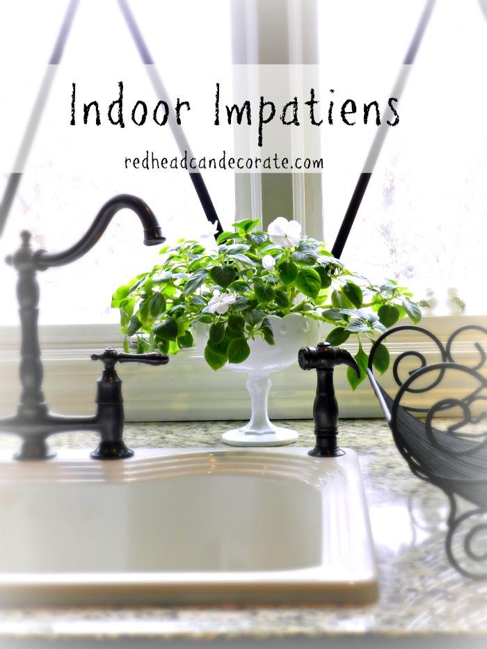 Indoor Impatiens