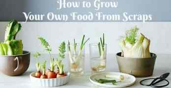 How to Grow Your Own Food From Scraps