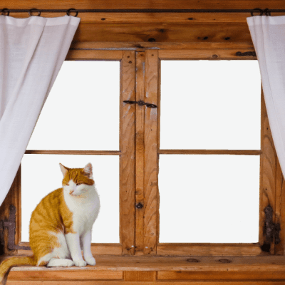 Giving Your Windows The Love They Need