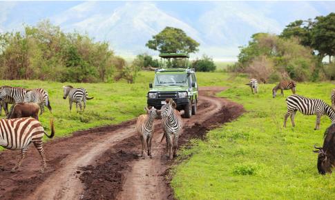 African Safari #Safari #Africa #AfricanSafari #travel #ad