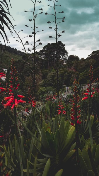 new-zealand-wellington-botanical-gardens-travel-blog-redheadventurer-liza-laboheme (9)